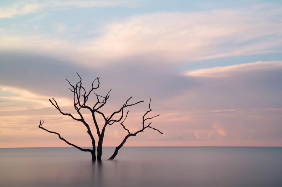 Ian Turnage-Butterbaugh – His image, taken using a 210 -second exposure and neutral density filter, captures a placid ocean at Botany Bay Beach, S.C. Ian is a member of the Professional Master's Program staff in the Duke University Pratt School of Engineering.